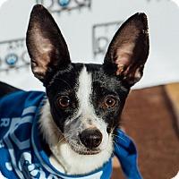 Adopt A Pet :: Fancy - Cross Roads, TX