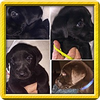 Adopt A Pet :: THE AWESOME EIGHT - Fishkill, NY