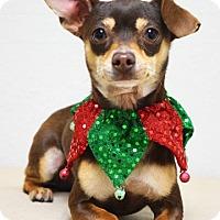 Adopt A Pet :: Grizzly - Dublin, CA