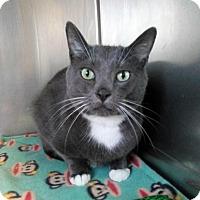 Adopt A Pet :: Brooks - Sauk Rapids, MN