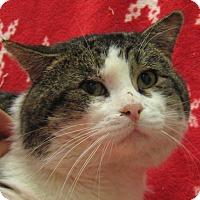 Adopt A Pet :: Hulk - Redwood Falls, MN