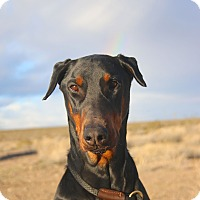 Adopt A Pet :: Plato - Fillmore, CA