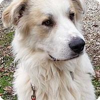 Adopt A Pet :: Yeti - new! - Beacon, NY