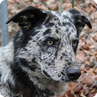 Adopt A Pet :: Willie - Washington, DC
