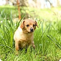 Dog Adoption Auburn Ne