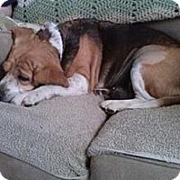 Adopt A Pet :: Francine - Phoenix, AZ