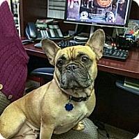 Adopt A Pet :: Winnie Cooper - New Orleans, LA