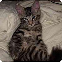 Adopt A Pet :: BabyBoy - Jenkintown, PA