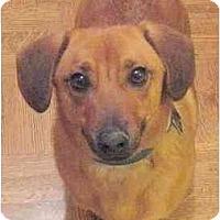 Adopt A Pet :: LANCE - Portland, OR