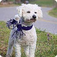 Adopt A Pet :: Fluffy - Albany, NY
