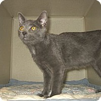 Adopt A Pet :: SMOKEY - 2013 - Hamilton, NJ