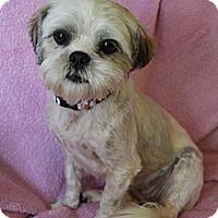 Adopt A Pet :: Blossom - Wytheville, VA