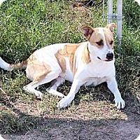 Adopt A Pet :: Rascal - Waller, TX