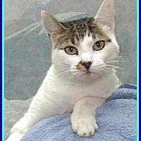 Adopt A Pet :: Precious - Lago Vista, TX