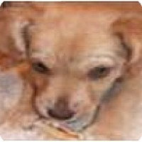 Adopt A Pet :: Trish - Cleveland, OH