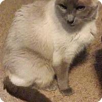 Adopt A Pet :: Lucy Liu - Fairborn, OH
