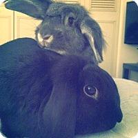 Adopt A Pet :: Neville and Murph - Conshohocken, PA