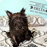 Adopt A Pet :: Delta Dawn-Pending Adoption - Omaha, NE