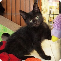 Adopt A Pet :: Bennett - Ocean City, NJ