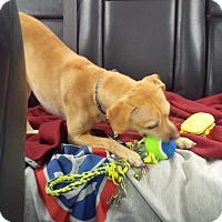 Adopt A Pet :: Charlie 2 - San Francisco, CA