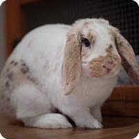 Adopt A Pet :: Benson - Conshohocken, PA