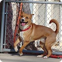 Adopt A Pet :: Charmer - Lufkin, TX