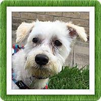 Adopt A Pet :: Sunny - SE TX - Tulsa, OK