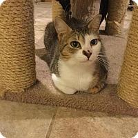 Adopt A Pet :: Penny Lane - Barnegat, NJ