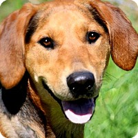 Adopt A Pet :: MISS PEPPER(ADORES CHILDREN!! - Wakefield, RI
