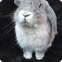 Adopt A Pet :: Barron - Watauga, TX