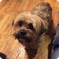 Adopt A Pet :: Button - McKenna, WA
