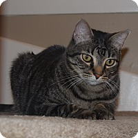 Adopt A Pet :: Leon (declawed) - Houston, TX
