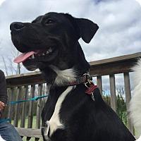 Adopt A Pet :: Pluto - PENDING - Grafton, WI
