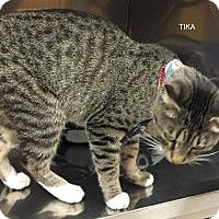 Adopt A Pet :: TIKA - Hibbing, MN