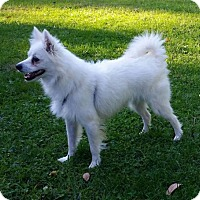 Adopt A Pet :: Sky of  Dayton, OH - Lindsey, OH