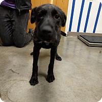 Adopt A Pet :: Cher - Ottawa, KS