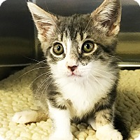 Adopt A Pet :: Princess Peach - Los Alamitos, CA