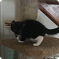 Adopt A Pet :: George - Hampton, VA