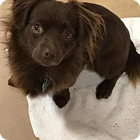 Adopt A Pet :: Xerxes - Freeport, FL