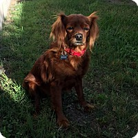 Adopt A Pet :: Rosie (Boca Raton, FL) - Enterprise, FL