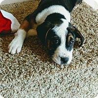 Adopt A Pet :: Bobbin - Barnesville, GA