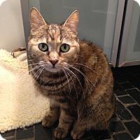 Adopt A Pet :: Xena - Toronto, ON