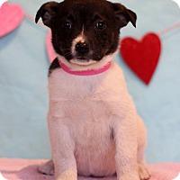 Adopt A Pet :: Mallery - Waldorf, MD