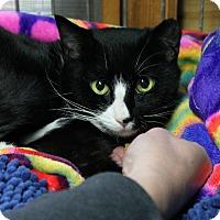 Adopt A Pet :: Sally - Monroe, NC