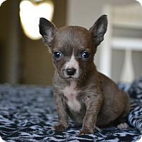 Adopt A Pet :: Finch - Southington, CT