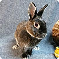 Adopt A Pet :: Greta - Newport, DE