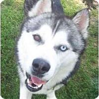 Adopt A Pet :: Bandit - Belleville, MI