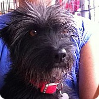 Adopt A Pet :: Dimitria - North Hollywood, CA