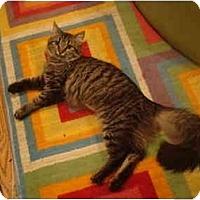 Adopt A Pet :: Tootsie--PETSMART - Muncie, IN