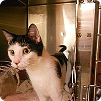 Adopt A Pet :: Ms. Moo - Maywood, NJ